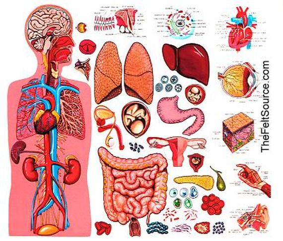 The Body Systems - The Wonderful Human Body